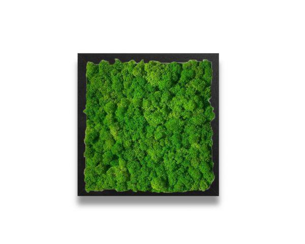 Green Emerald Moss Art on Black Frame
