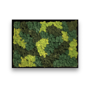 Wall art with mixed moss