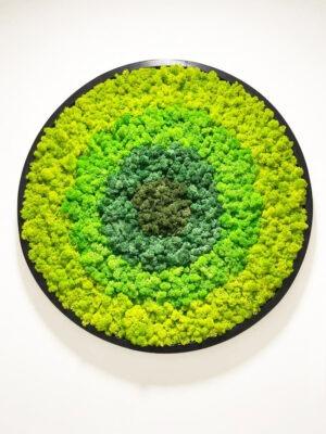 Green moss rainbow