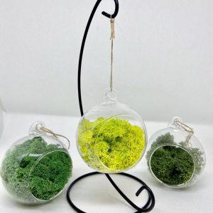 Set of 3 glass ball terrarium