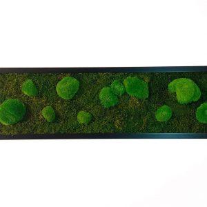 Wall art with bulb moss