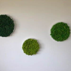 Mixed Green Moss on Circular Frames