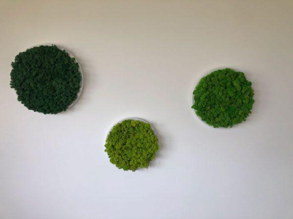 Mixed Green Moss on Circular Frames