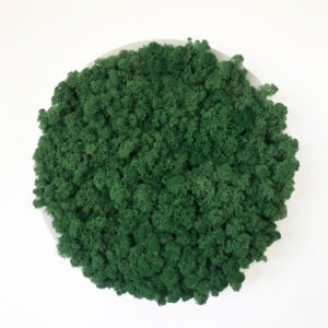 Emerald Green Moss Art on Circular Frame