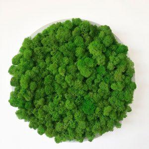 Spring Green Moss Art