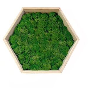 Green Moss Art on Hexagonal Wooden Frame