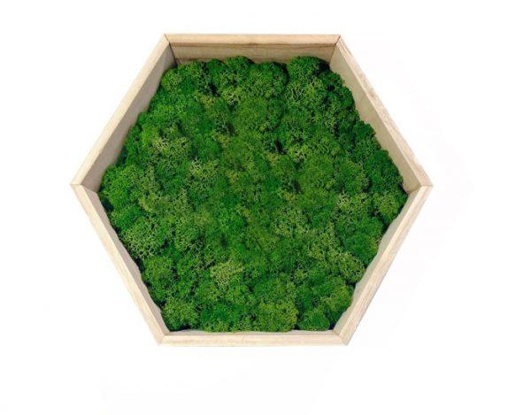 Green Moss Art on Hexagonal Wooden Frame