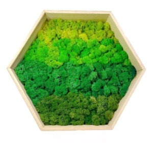 Mixed Green Moss on Hexagonal Wooden Frame