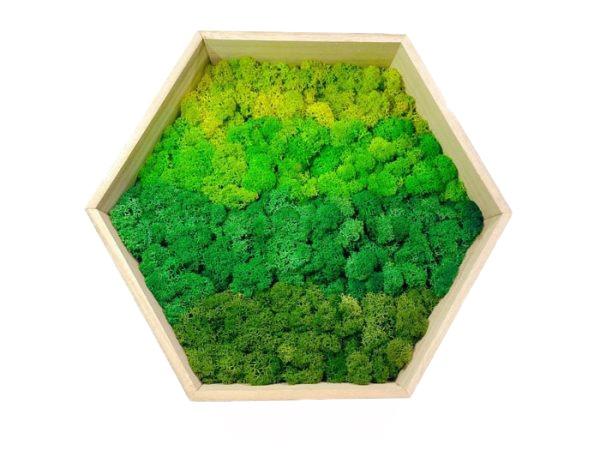 Mixed Green Moss on Hexagonal Wooden Frame